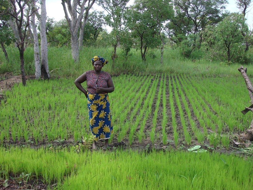 Seed-plot-during-weeding,-Togo