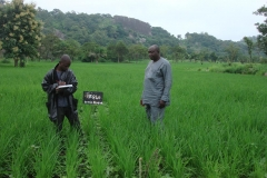 Field-inspection,-Togo
