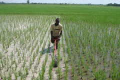 Weeding-equipment-acquiered-by-the-project,-Burkina
