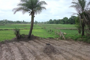 Land preparation Casamance & Daloa